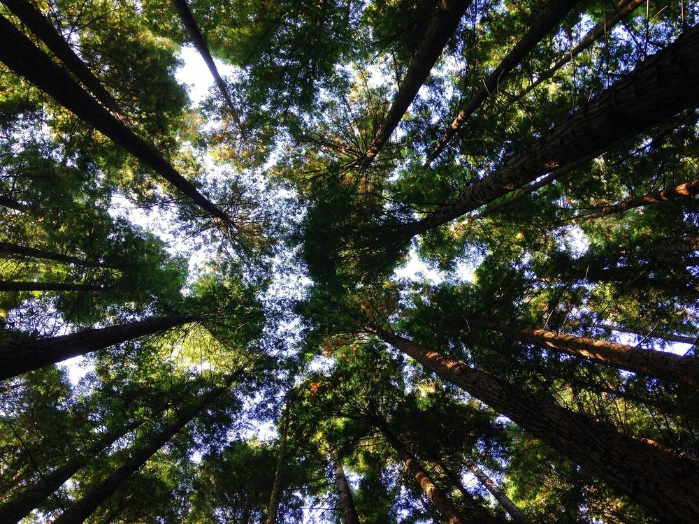 unsplash woods