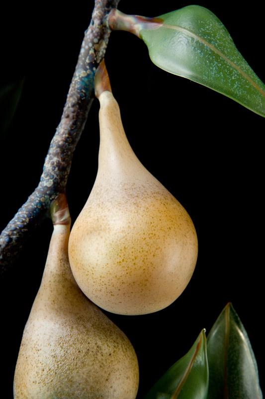 Pear Branch.jpg
