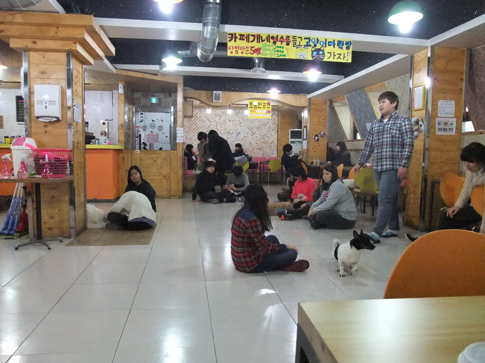 In the dog café in Seoul