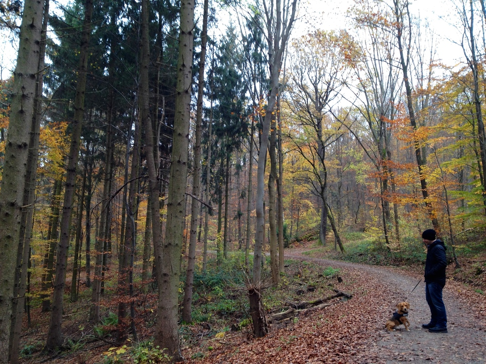 Autumn along the  Weinsteig  path