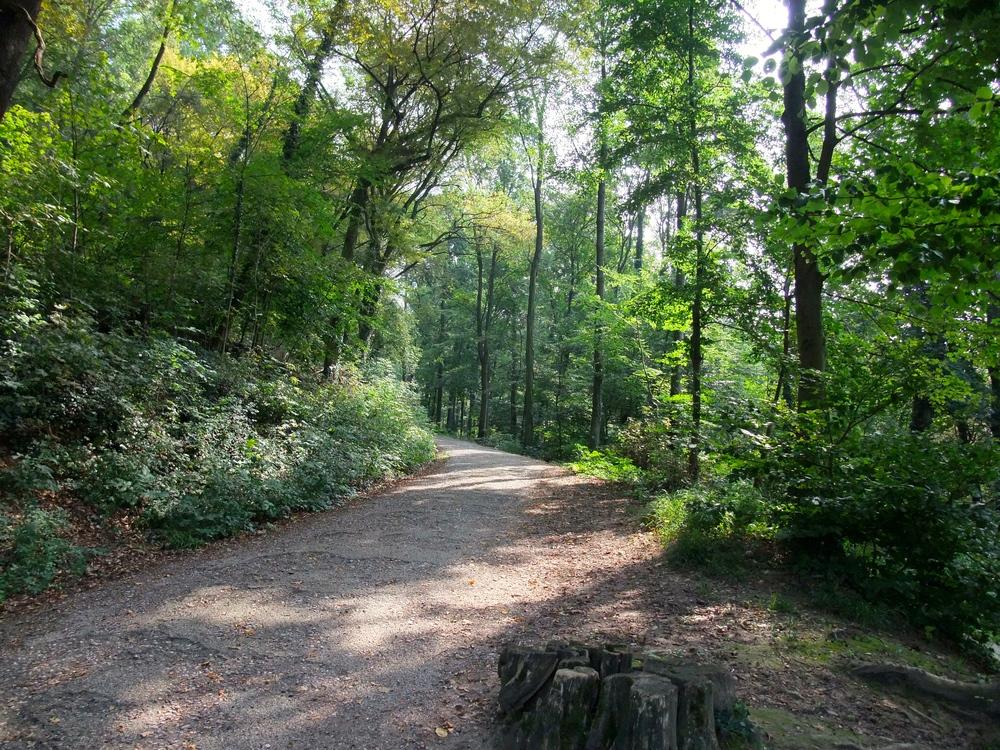 Hiking up the  Heiligenberg