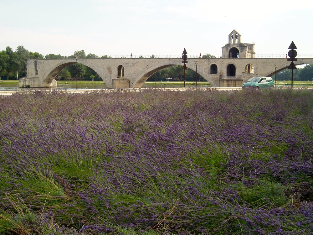 Lavender fields near Avignon, France in 2011