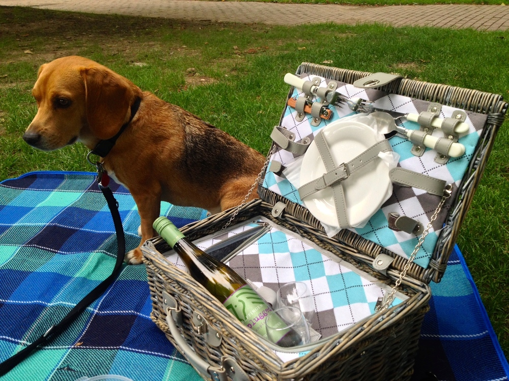 Our picnic basket, lined blanket, and Leo at the Stuttgart  Sommerfest