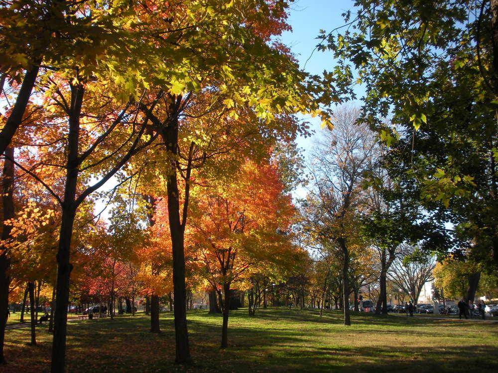 Autumn Colors.JPG