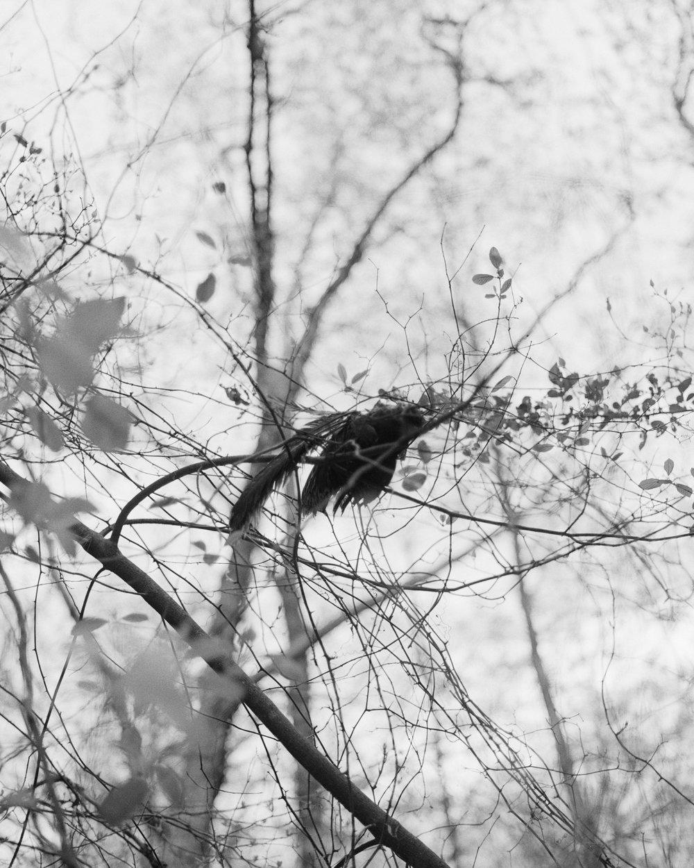bird1_edit2.jpg