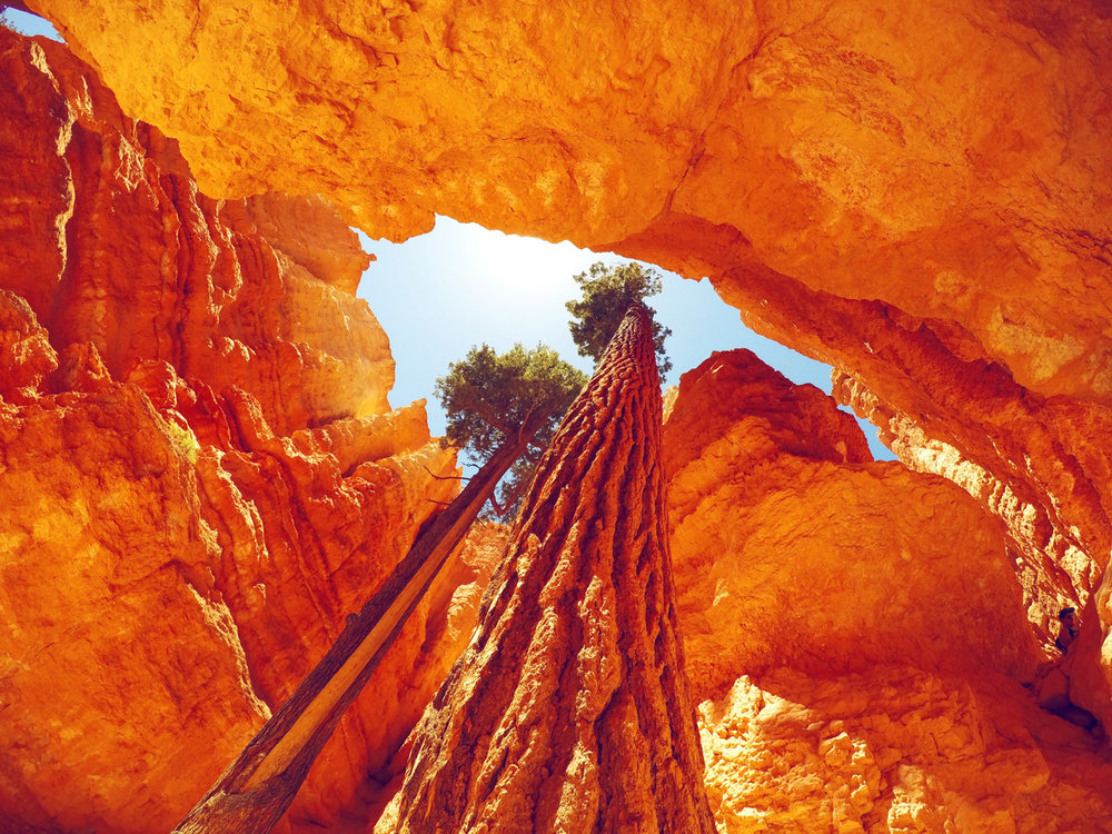 Bryce-Trees-web.jpg