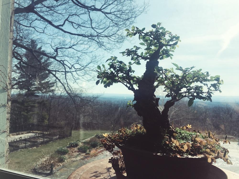 アップステートのウィークエンドハウスからの景色。