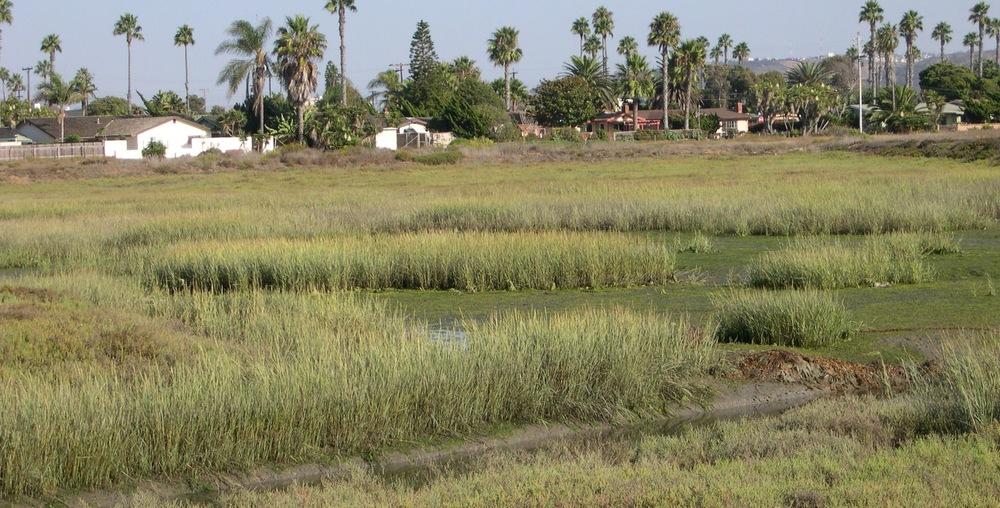 Tijuana River Estuary