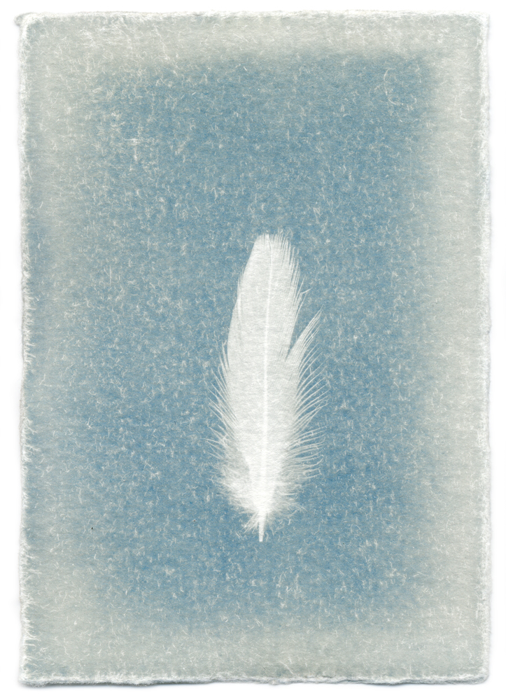 From the ongoing series FEATHERS, 2008-Present.            Unique cyanotype print.
