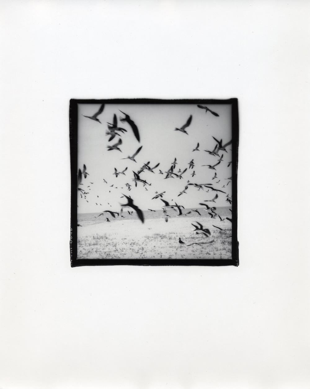 "Biloxi, Mississippi, 1988. Selenium toned silver gelatin print. Ed. of 25. 4.25""x4.25"" image on 8""x10"" paper."