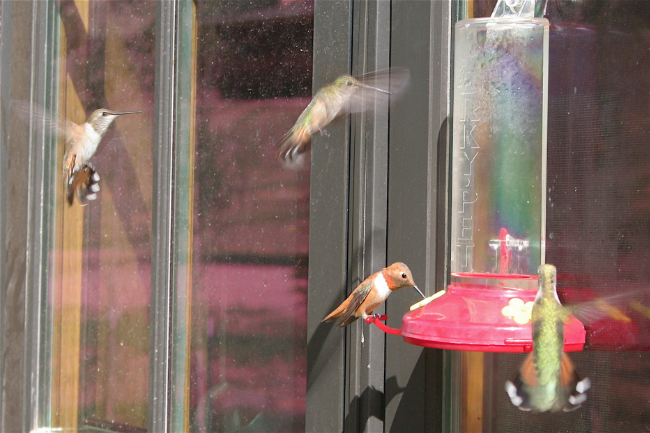 Brush Creek hummingbirds.