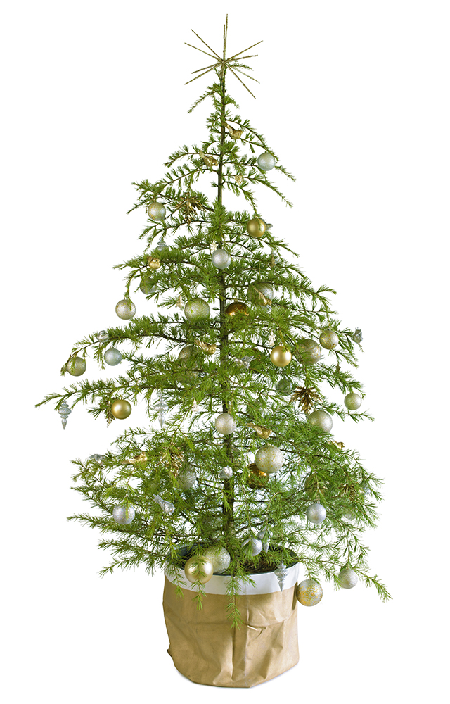 Metallic real potted Christmas tree