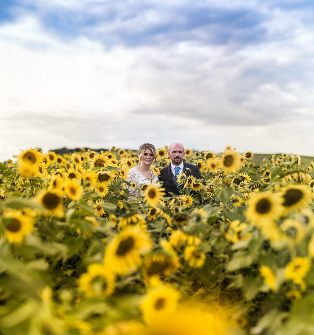 brenizer portrait of wedding couple in a Sunflower field Suffolk, England