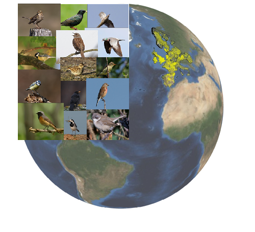 The Pan-European Common Bird Monitoring Scheme monitors the population dynamics of common breeding birds in more than 20 countries (map data source: EBCC).