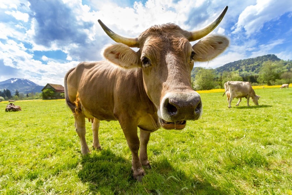 Why I'm eating meat again