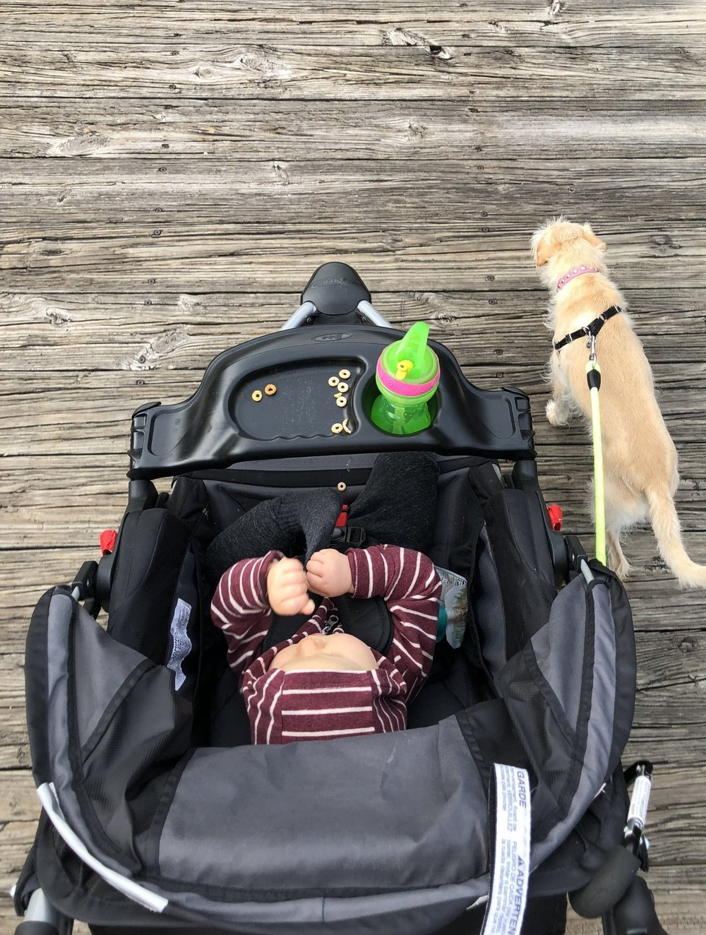 sippy cup stroller