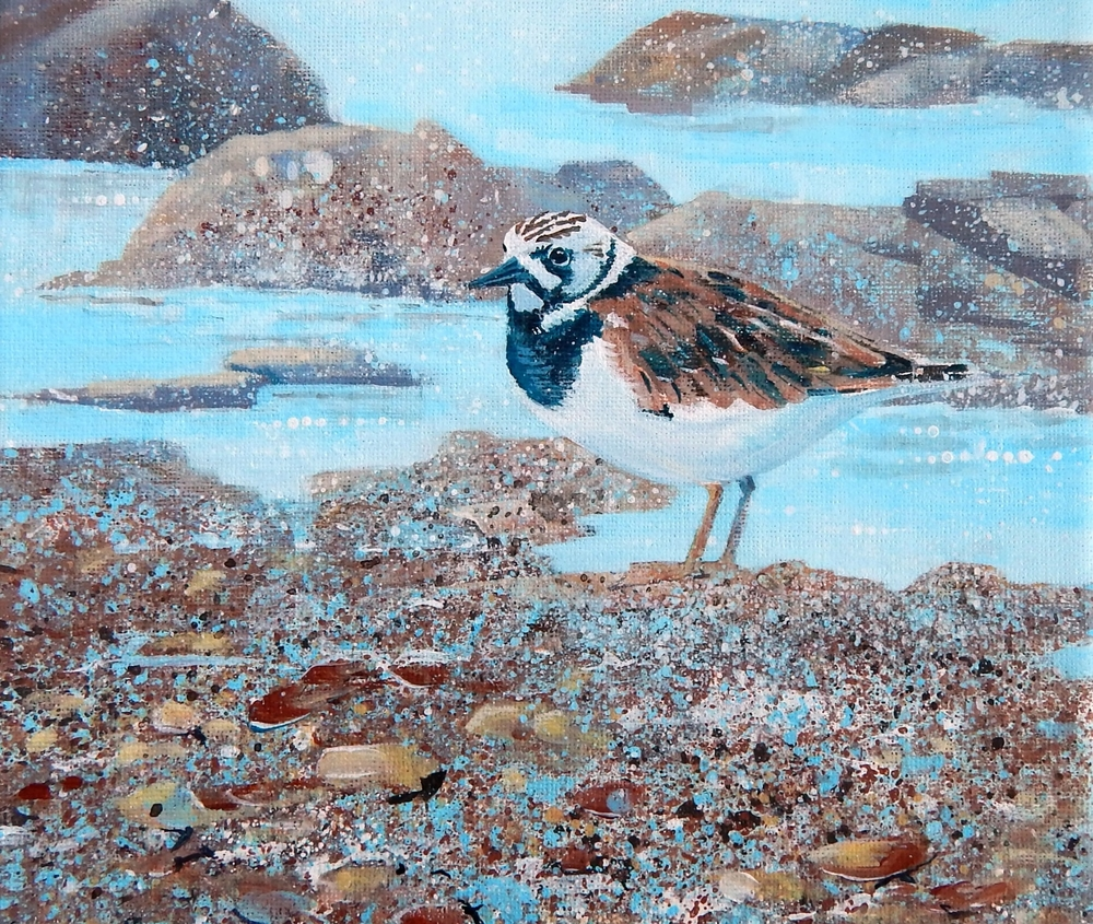 Turnstone and Pebbles 20 x 20 cm.jpg