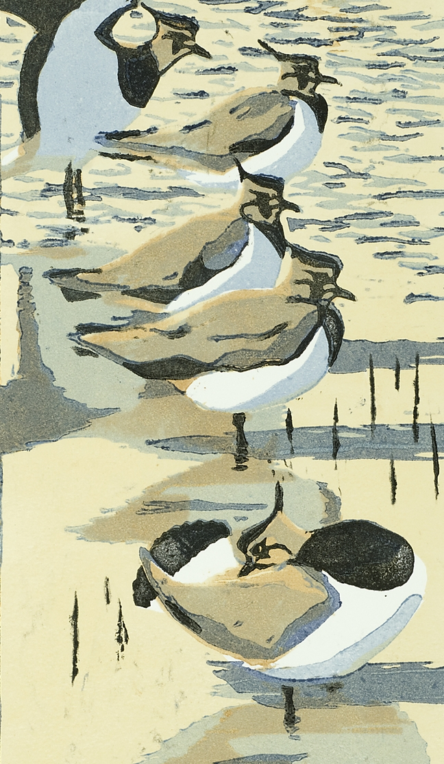 Five+Lapwings.jpg