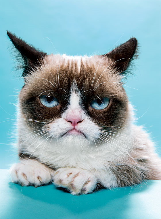 Maybe grumpy cat is actually an enlightened Spiritual guru!