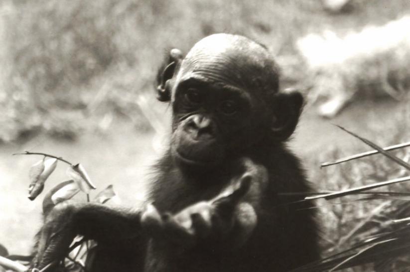 Monkeyhand2.jpg