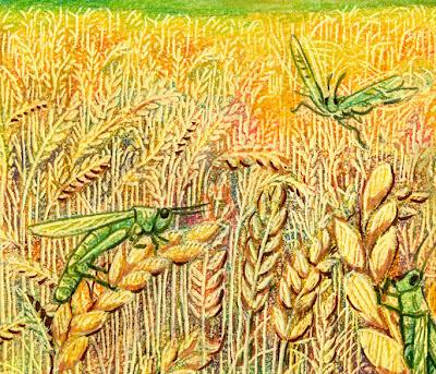 grasshoppercloseup.jpg