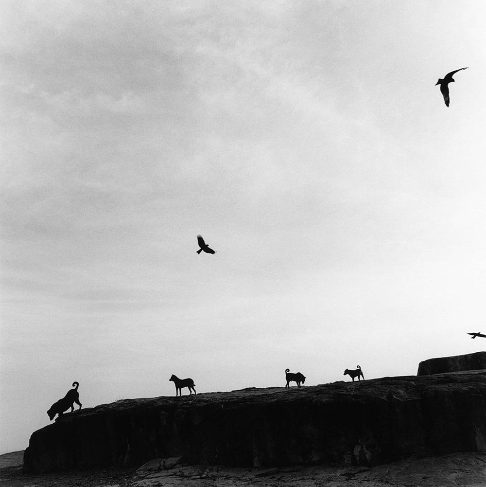 Perros perdidos (Graciela Iturbide, Rajastán, 1998).jpg