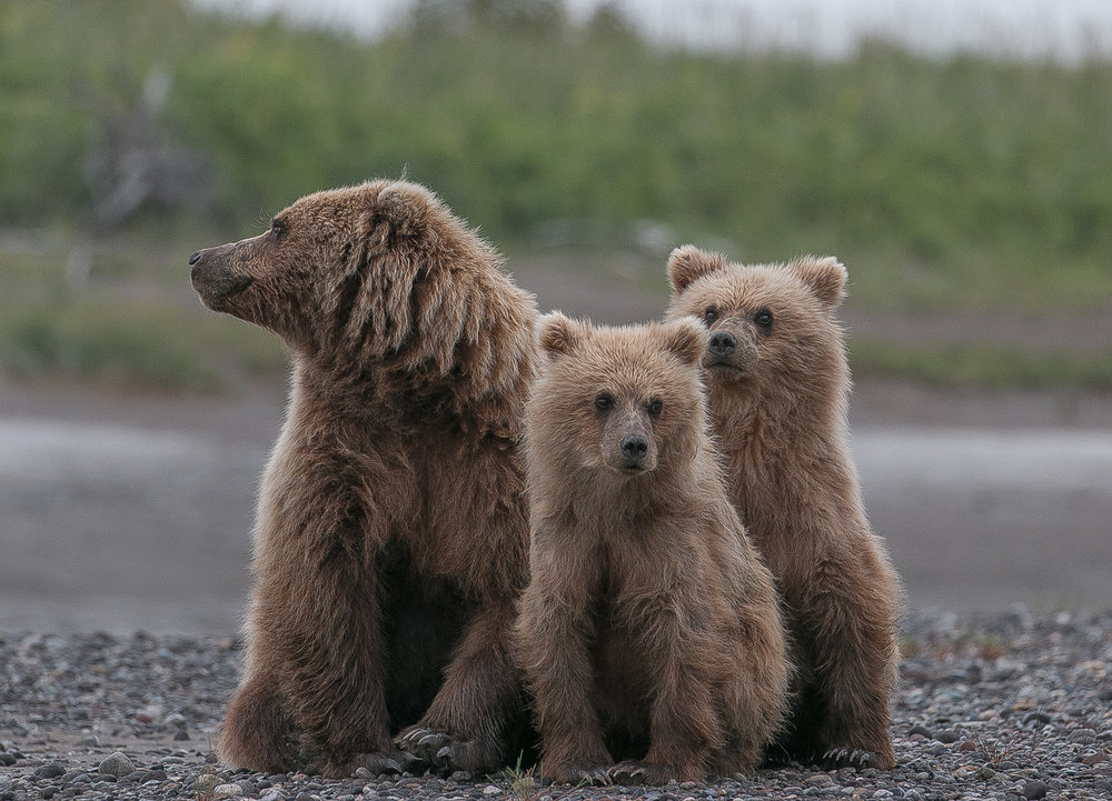 FAMILY PORTRAIT-MOTHER AND 2 YEAR OLD CUBS