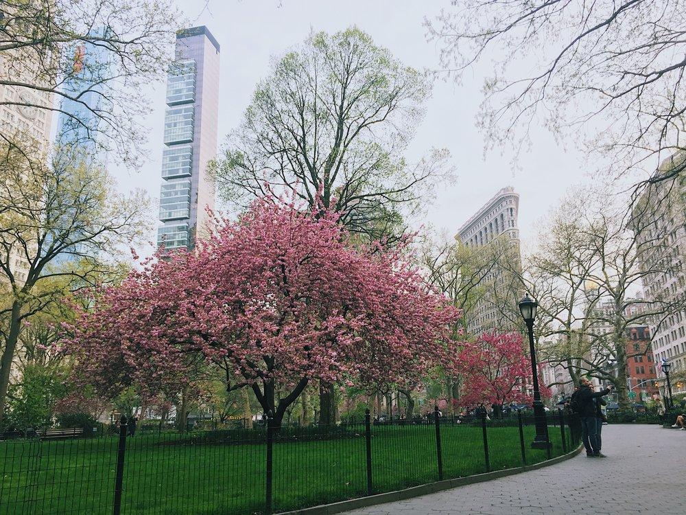 Madison Square Park, NYC 2017