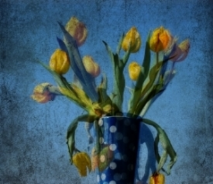 "Brut Carniollus for ""Yellow Tulips with Ploka Dots"""