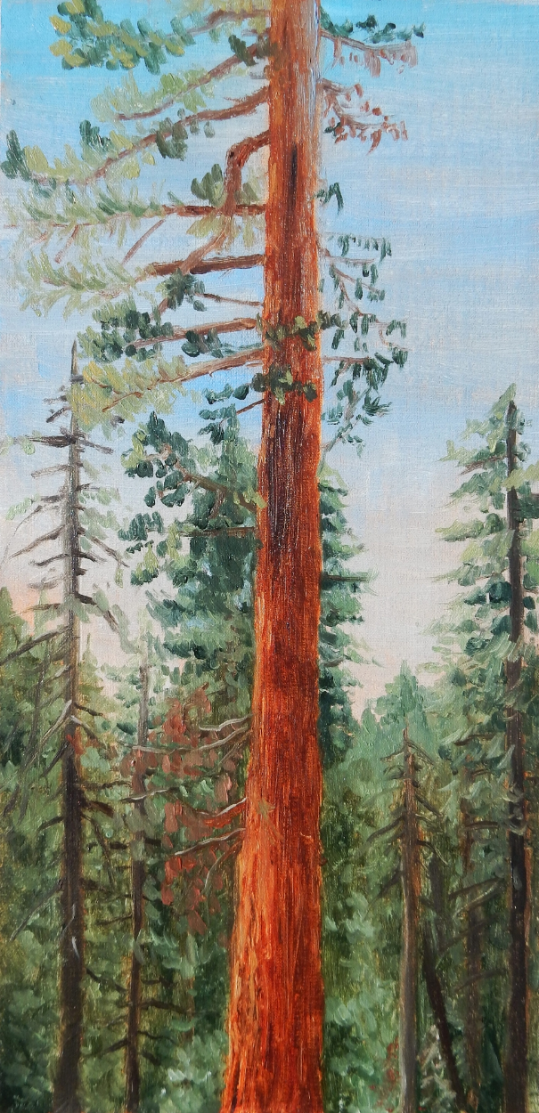 "Emily Boutilier Sullivan for  ""Giant Sequoia"""