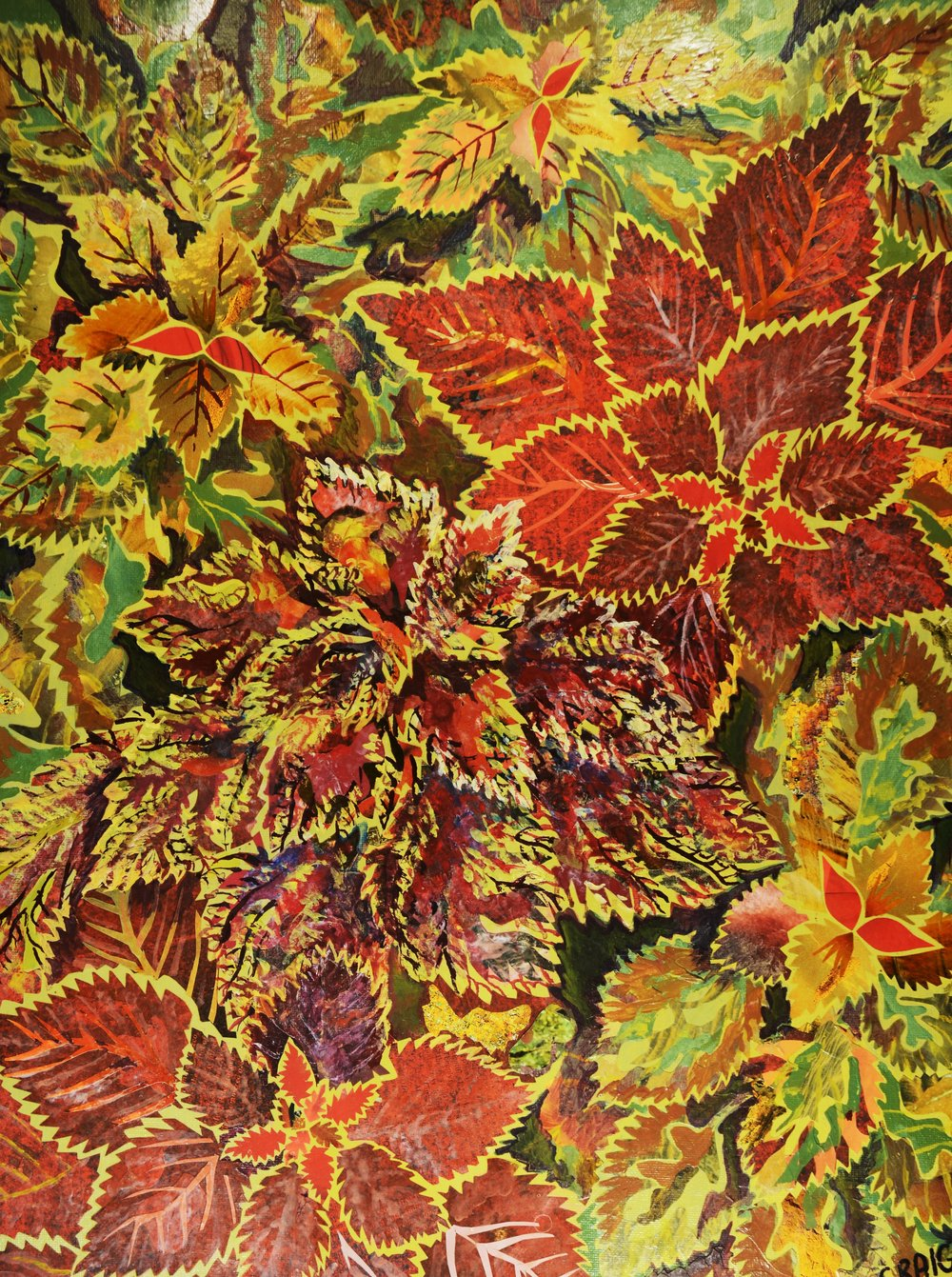 "Bob Craig for ""Coleus"""