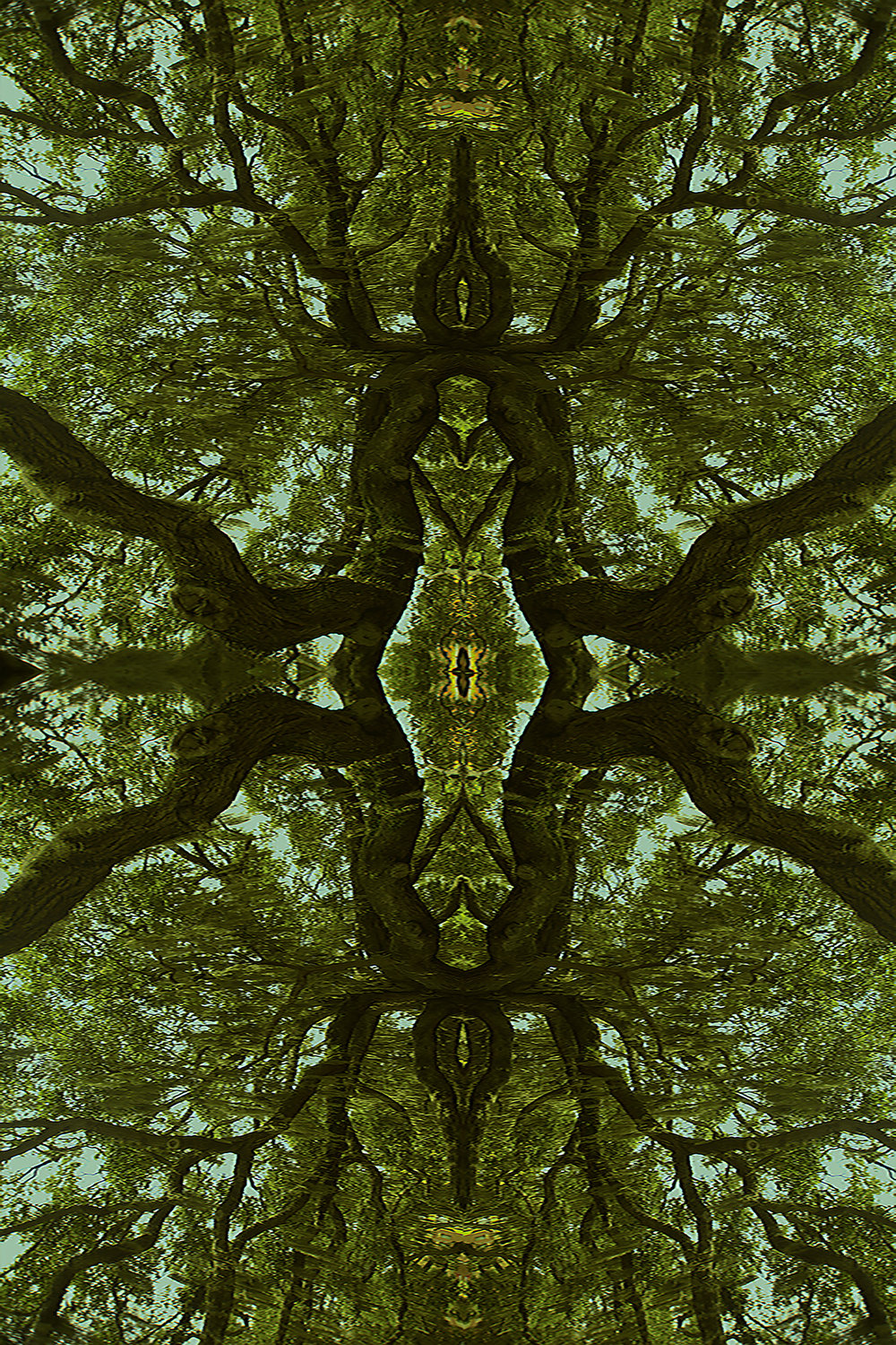 20496926-Kaleidoscope Oak.jpg