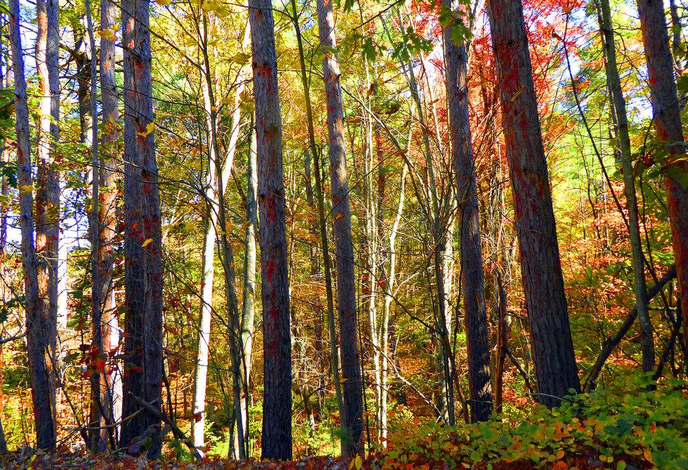 20496922-Forest.jpg