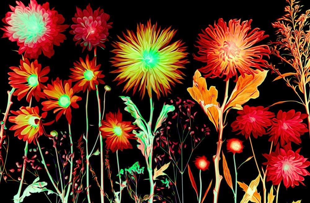 dbJR natures fireworks 20X 24 750.jpg