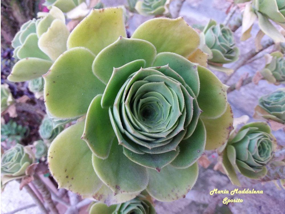 20496930-Maria Maddalena Sposito_Le rose magiche _Photography_8,26X11,69_100.jpg