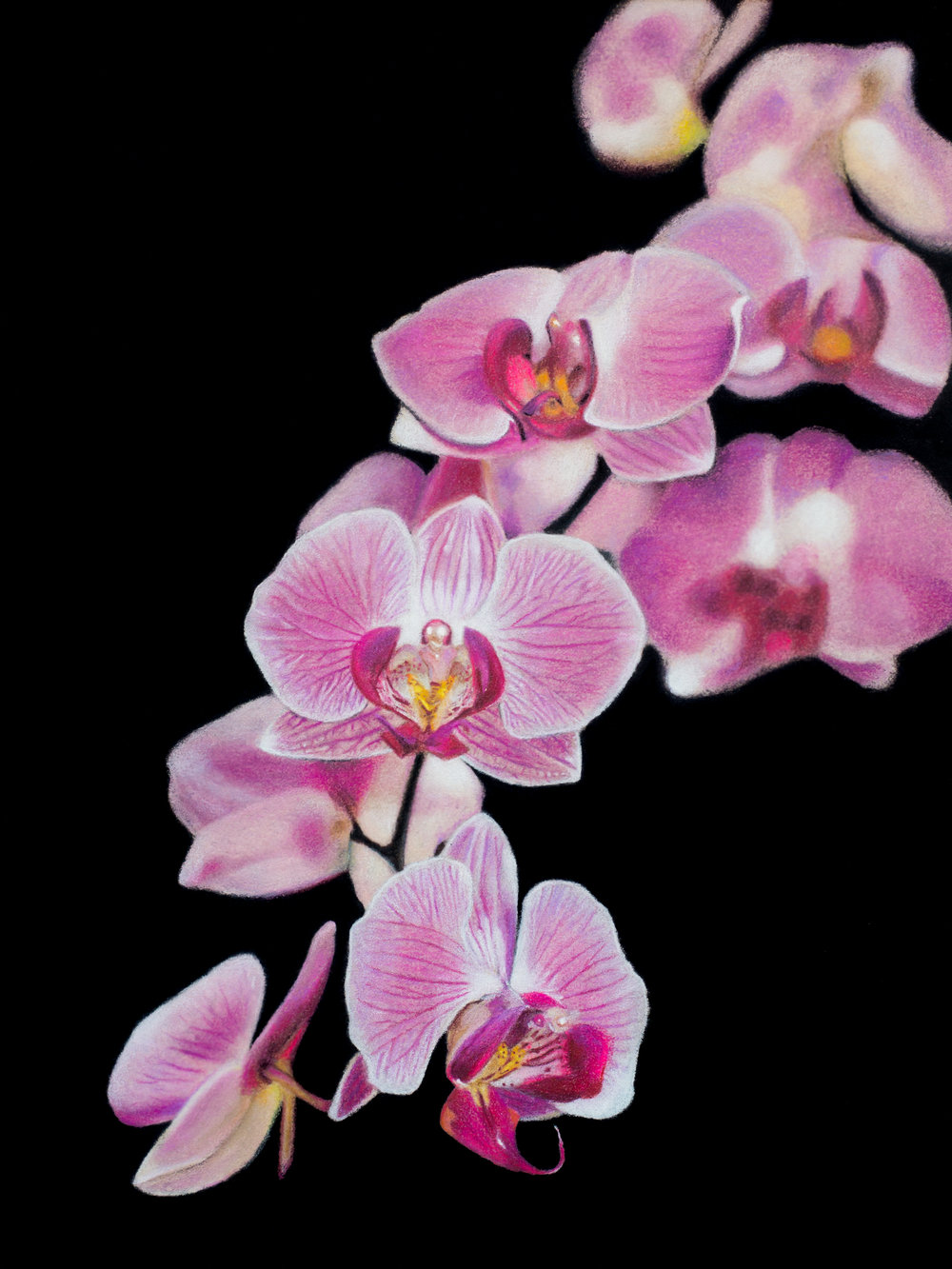 20496922-mandypeltier_orchidblossoms_mixedmedia_9x12_700 (1 of 1).jpg