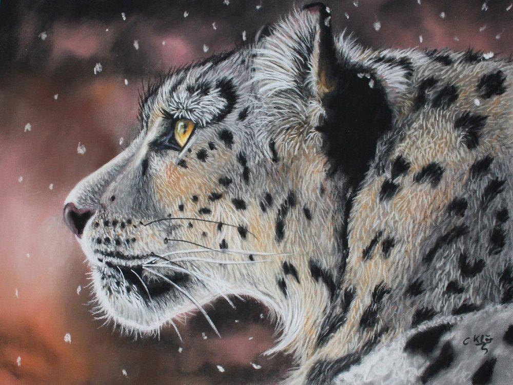 20496922-Catrin Klöcker. Snow Leopard. pastel. 9,4x12,9. 400.jpg