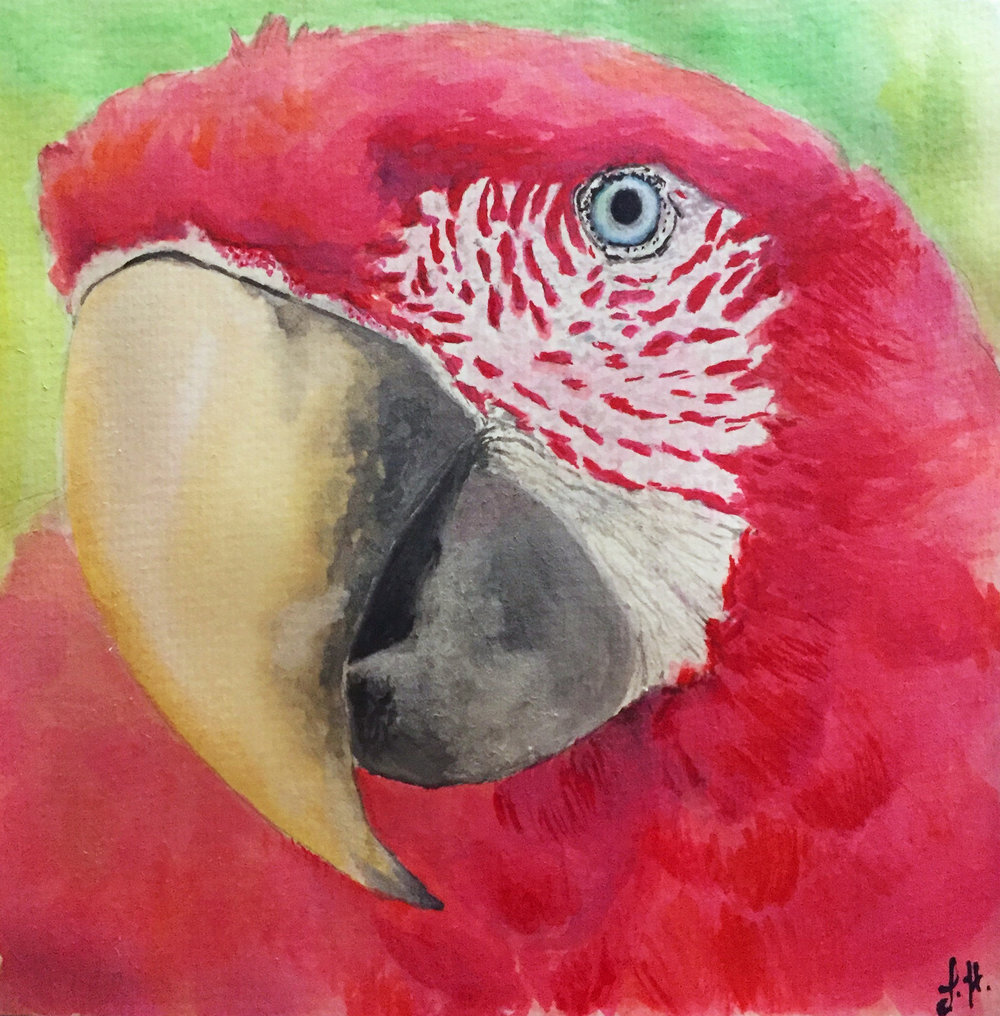 20496930-lisahendron_parrot_watercolor_8x8_125.jpg
