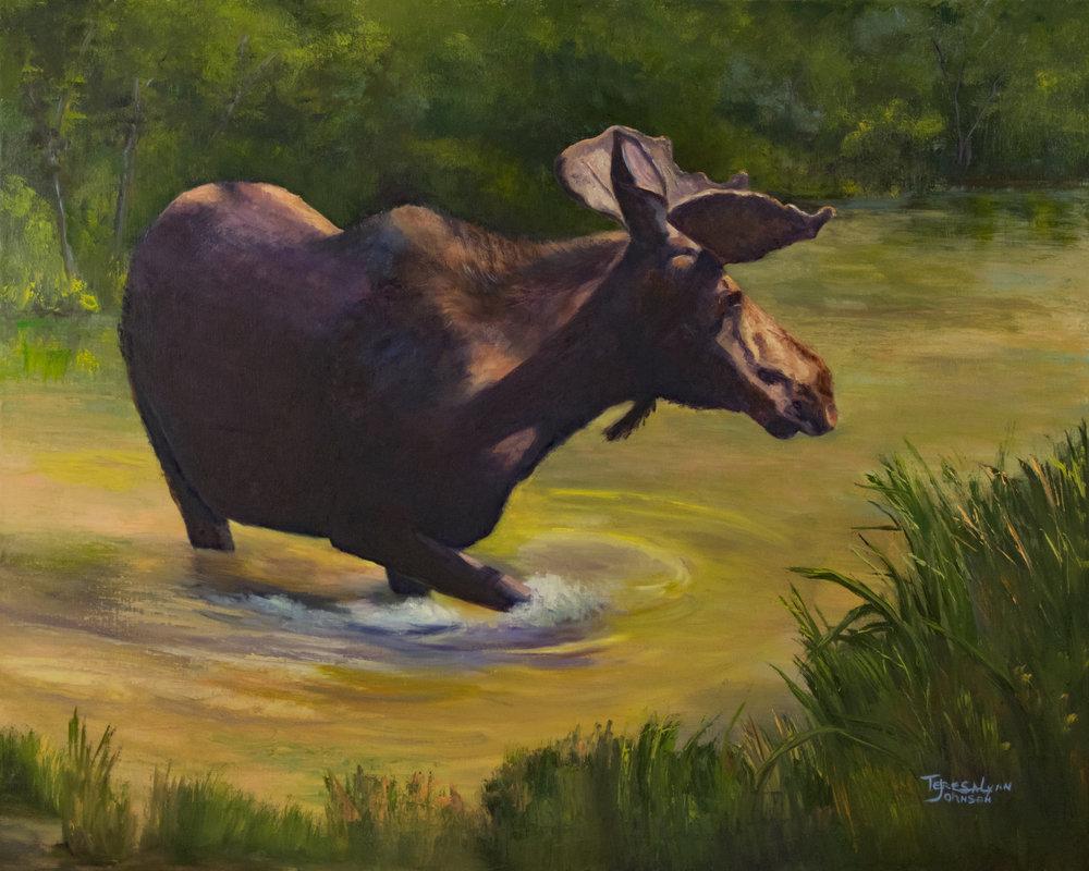 20496922-Moose_Crossing.jpg