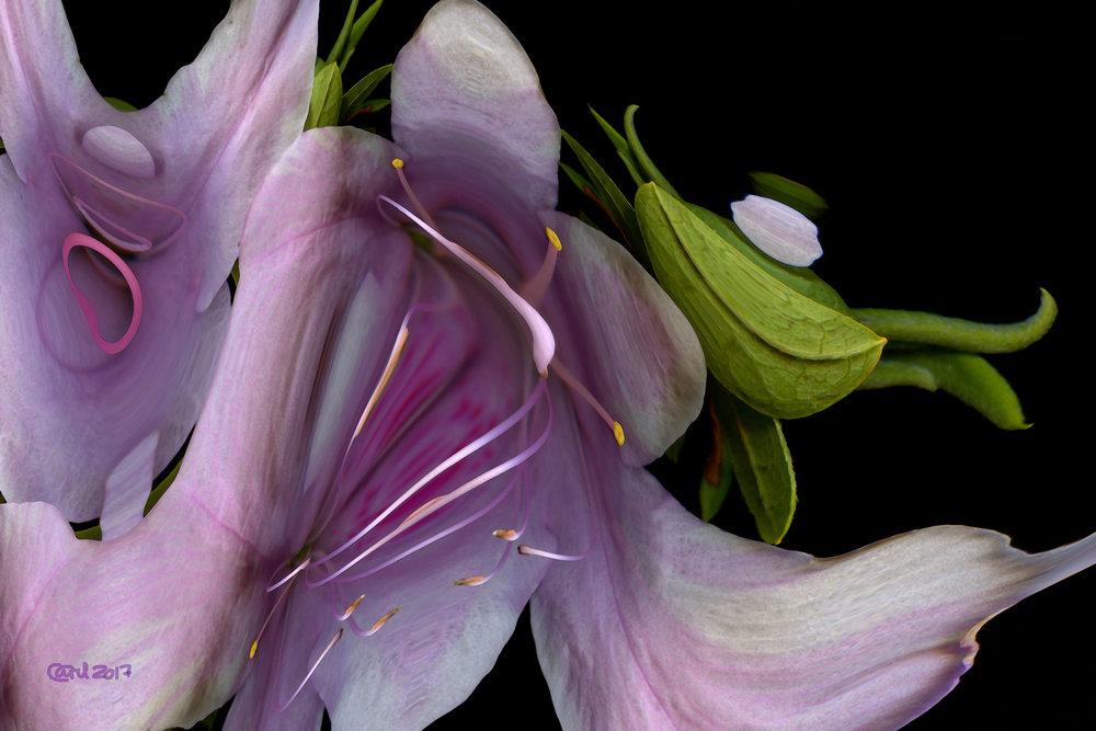 20496926-Carel Schmidlkofer_Digital Art_Rhododendron Ripple_24x36_200_2017.jpg