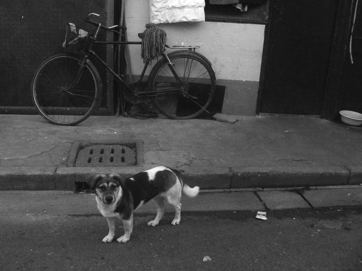 SLUM DOG.jpg