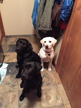 Rosco, Wrigley and Sugar.jpg