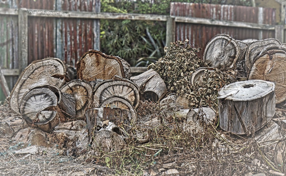 Wooden blocks adorn the overgrown backyard of a house awaiting earthquake repairs