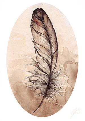 Sepia feather in watercolour and pencil