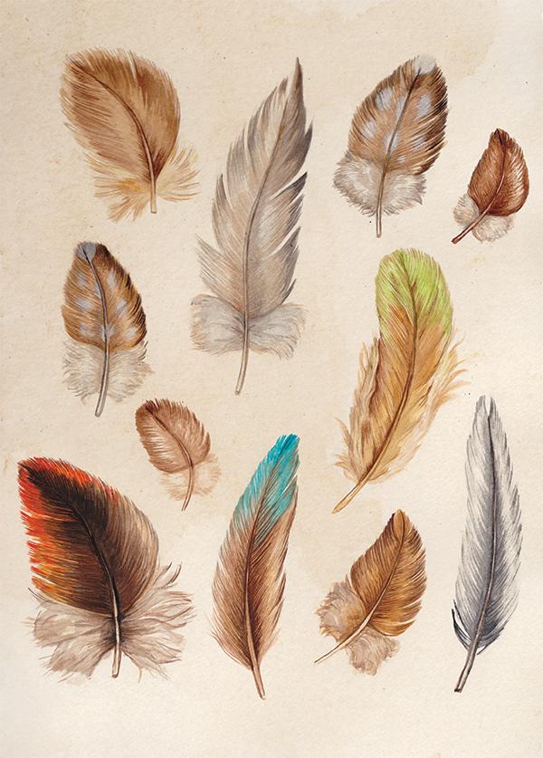 JenniferMagno-Feathers-Web.jpg