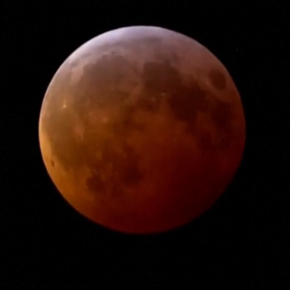 Tonight's Super Blood Wolf Moon Eclipse. So awesome that this was our Moon for the week he was born. Our Lil Wolf here's a beautiful moon to howl at. Love mommy!! 🌙🐺🌕🐺🌙