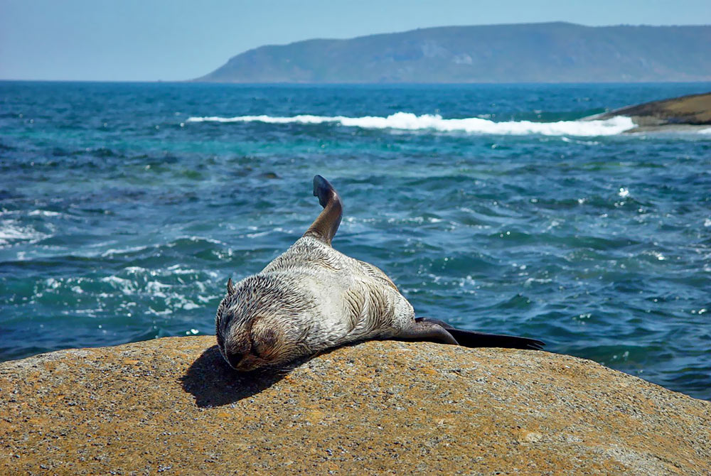 Sunbathing-Seal.jpg