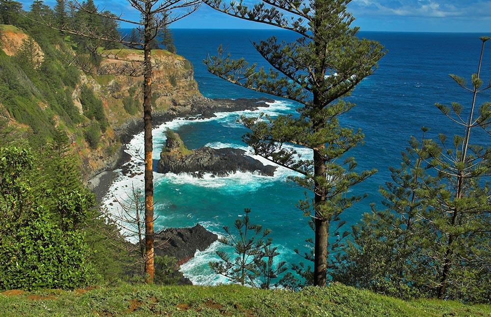 Araucaria_heterophylla_Norfolk_Island_2.jpg