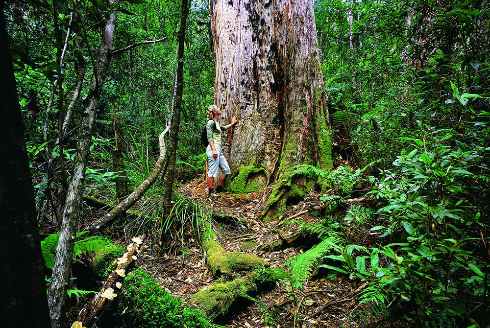 Tarkine-Forest.jpg