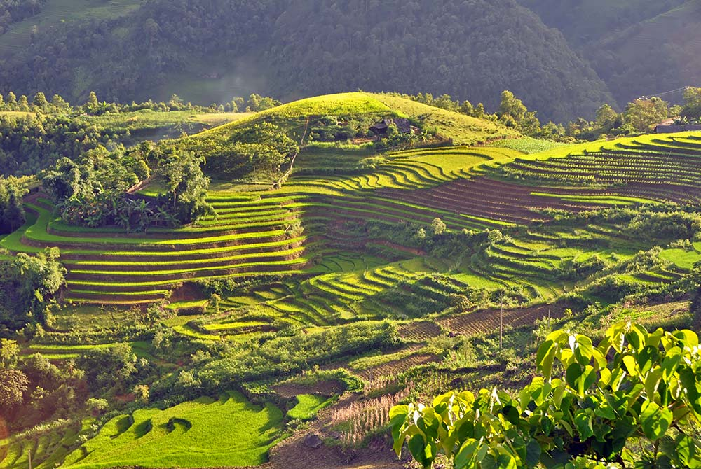 Terraced_fields_Sa_Pa_Vietnam.jpg